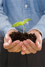 seedling_hands